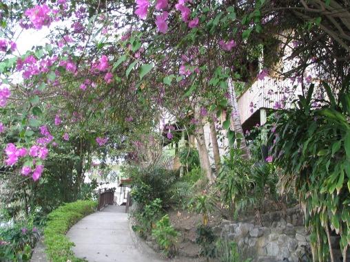Anilao garden