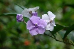 FLOWER~3