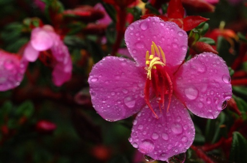 FLOWER~8
