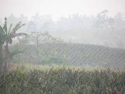foggy ottom farm