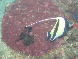 Nemo character