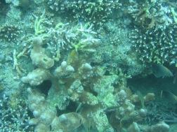 reef of coral